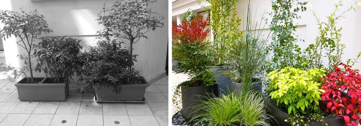 Plantation dans la cour d'un hôtel particulier par un jardinier paysagiste
